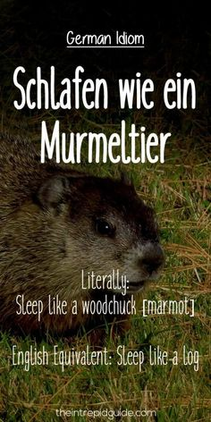 German Idioms: Schlafen wie ein Murmeltier. Literally: Sleep like a woodchuck [marmot]. English Equivalent: Sleep like a log.