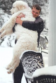 Now this is a Hug.we have a Great Pyrenees/Golden Retriever and while he is one of the most loving guys there is, he is also a LOAD! Love My Dog, Puppy Love, Cute Puppies, Cute Dogs, Dogs And Puppies, Doggies, Puppies Gif, Corgi Puppies, Funny Dogs