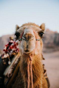 JORDAN travel guide – Camel rides in Wadi Rum -https://ourgoodadventure.com/2017/06/jordan/