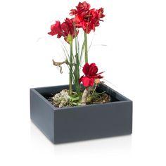 die besten 25 gute pflanzen f r innenr ume ideen auf pinterest zimmerpflanzen wenig licht. Black Bedroom Furniture Sets. Home Design Ideas