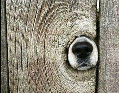 Is this what a dogwood tree looks like after going through a sawmill? Love My Dog, Animals And Pets, Funny Animals, Cute Animals, Funniest Animals, Rottweiler, Beautiful Dogs, Animals Beautiful, Animal Noses