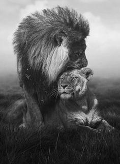 TOP 10 Emotional photos of animals. Jesus as a loving King . The Loin of Judah. It's Lion of Judah. Beautiful Cats, Animals Beautiful, Simply Beautiful, Beautiful Pictures, Animals And Pets, Cute Animals, Wild Animals, Baby Animals, Gato Grande