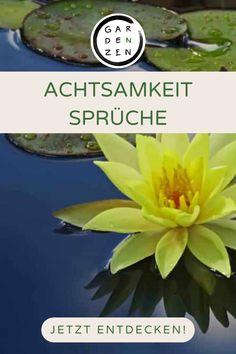 ACHTSAMKEIT ERLEBEN UND LERNEN - ENTDECKE UNSEREN SHOP UND ACHTSAMKEITS BLOG achtsamkeit, achtsamkeit sprüche, achtsamkeit spruch, achtsamkeit sprüche kurz, achtsamkeit sprüche gesundheit, meditieren, meditieren lernen, meditieren anfänger, meditieren mit kindern,meditation, entspannung, entspannungsübung, entspannungsraum, entspannungsübung kinder, meditation lernen, meditation deutsch, Thich Nhat Hanh, Zen, Blog, Gardens, Plants, Daily Meditation, Indian Sayings, The Secret Of Life, Outdoor Gardens