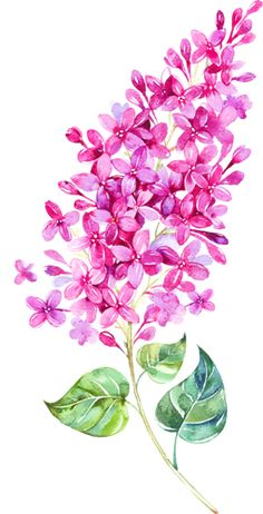 I honestly adore the tones, lines, and depth. This is definitely a really great choice if you want inspiration for a Botanical Illustration, Botanical Art, Watercolour Painting, Watercolor Flowers, Lilac Tattoo, Lilac Flowers, Flower Wallpaper, Flower Art, Art Drawings