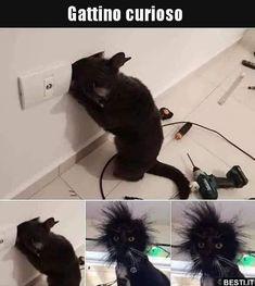 Gattino curioso..