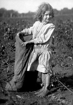 Lewis Hine, Edith, 5 years old, picking cotton in September 1913