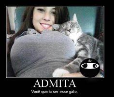gato - LOUCURAS DE AMOR