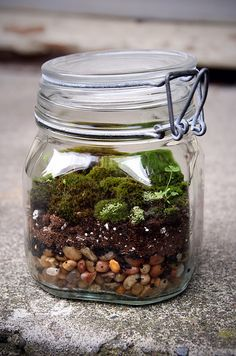 Moss Terrarium.  I am almost positive I can grow moss without killing it. Pretty sure.  This is cute!