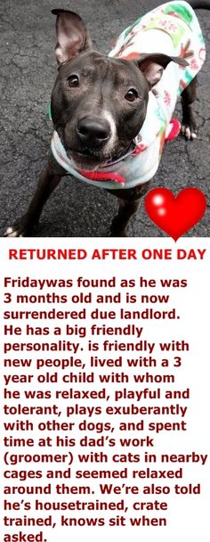 SUPER URGENT Manhattan Center FRIDAY – A1066523  ***RETURNED AFTER ONE DAY***SAFER: AVERAGE HOME***  NEUTERED MALE, BLACK / WHITE, AM PIT BULL TER MIX, 11 mos RETURN – ONHOLDHERE, HOLD FOR ID Reason ALLERGIES Intake condition UNSPECIFIE Intake Date 03/05/2016 http://nycdogs.urgentpodr.org/friday-a1066523/