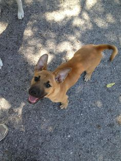 Black Mouth Curs on Pinterest | Black Mouth Cur, Media General and ...
