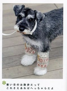 Classy!  I love this so much.  Handmade Dog Accessory Japanese Sewing by JapanLovelyCrafts