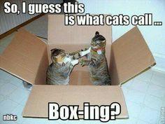 Box-ing