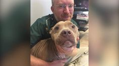 Vet Was Supposed To Euthanize Dog — But Decided To Save Him Instead (The Dodo) - This vet saved this 5-year-old Pitbull from horrific neglect and animal cruelty by its owners. Kudos to a compassionate, ethical veterinarian - who did the right thing! #dog #loveanimals #ethical #veterinarian