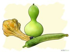 Grow Gourds Step 1.jpg