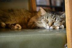 Jaffy snooze time Cats, Animals, Gatos, Animales, Animaux, Animal, Cat, Animais, Kitty