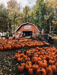 pumpkin patch //