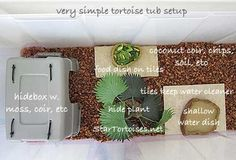 diy tortoise habitat - Google Search  Simple idea to use tiles near food,I would use slate