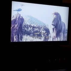 The Lion king . Ramadan Sweets, Ramadan Recipes, About Time Movie, Breakfast Recipes, Lion, Dinners, Cooking, Movies, Leo