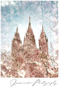 Latest adventures and tips from Jessica's Photography, Utah's photographer for weddings, seniors, family portraits, and more! Lds Temple Pictures, Lds Pictures, Mormon Temples, Lds Temples, Later Day Saints, Salt Lake Temple, Lds Art, Temple Wedding, Lds Quotes