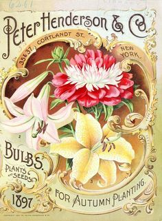 I have a framed copy of this! Peter Henderson & Co. Bulbs, Plants and Seeds for Autumn Planting Vintage Seed Catalog. Vintage Labels, Vintage Postcards, Vintage Images, Seed Art, Paris Vintage, Vintage Gardening, Organic Gardening, Vintage Seed Packets, Seed Packaging