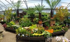 Autumn rainforest, planting inspiration, Mid Ulster Garden Centre