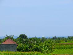 2/23(木)バリ島ウブドのお天気は晴れ。室内温度29.9℃、湿度65%。今日もとっても良い天気です~♪こ心も晴れやかっ♪♪♪