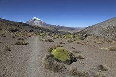 Sajama Nationalpark - Lagunenwanderung Mount Rainier, Mountains, Nature, Travel, Santa Cruz, Bolivia, National Forest, World, Traveling