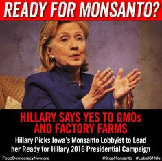 Hillary Clinton Loses Voters to Bernie Sanders Over Her Pro-GMO Stance - Democratic Underground