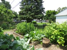 A great shot of my Veggie garden! Free Advice, Great Shots, Garden Design, Plants, Pictures, Photos, Landscape Designs, Plant, Grimm