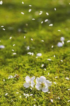Que Outono nos traga bons ventos, paz e harmonia para nossos corações e leveza para nossa alma. Que troquemos as folhas, mas que sejam mantidas as raízes e os valores. E que seja renovada a esperança e a convicção que é sempre tempo de Recomeçar, de Transformar-se dentro deste ciclo eterno das coisas mutáveis.   Desejo a todos um bom dia, uma boa semana, uma boa estação e uma vida maravilhosa!  Bem-vindo outono!!!
