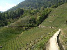 Frühlingsbilder vom Marliner Waalweg #Südtirol #Marling #Waalweg