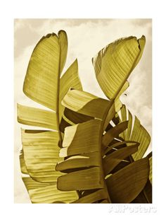 Palm Fronds III Premium Giclee Print by Rachel Perry at AllPosters.com