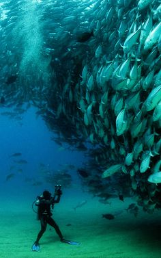 "An impressive capture titled ""David and Goliath"" of a large group of Bigeye trevally fish at Cabo Pulmo National Park in Baja California Sur, Mexico, by photographer Octavio Aburto for the National Geographic Photo Contest 2012 Under The Water, Under The Sea, The Ocean, Ocean Life, Fish Ocean, Ocean Beach, Rainbow Fish, Images Cools, Cool Pictures"
