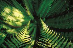 New Zealand Nature Union Jack, Trees To Plant, Plant Leaves, New Zealand Holidays, Ferns, Cactus Plants, Nature, Image, Logo