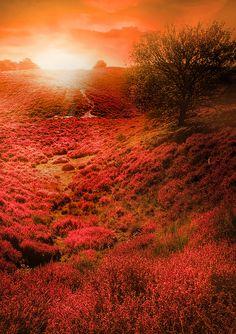 Veluwezoom, National park 'The Hoge Veluwe', The Netherlands. #greetingsfromnl