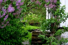 a lovely garden in my hometown Lillesand