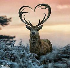 Beautiful & Amazing Photo & Video Collection