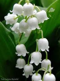 çiçek resimleri ile ilgili görsel sonucu