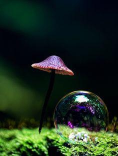 Honguito y burbuja
