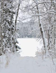 I Love Winter, Winter White, Snow Photography, Landscape Photography, Winter Scenery, Winter Beauty, Tree Art, Winter Christmas, Wonderland