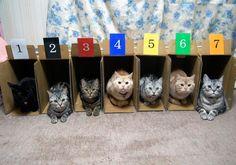 さぁ・・・全猫ゲートイン完了しました