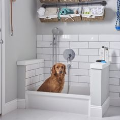 Laundry room for vertical spaces pinterest dog washing station msb3624 36 x 24 molded stone mop basin alternate view solutioingenieria Gallery
