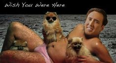 """""""The King Of All Memes: The 50 Best Nicolas Cage Memes For His 50th Birthday"""" YES, AMANDA, THIS IS FOR YOU"""