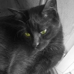 journalipstick Lilo  #PerleNoire #cats #cute #catsofinstagram #catlover #blackcat #pets