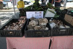 Warwick Valley Farmers Market | Photo Gallery