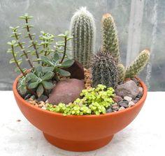 Cactus Garden                                                                                                                                                                                 Más