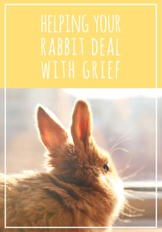 The loss of a rabbit can be emotional for both you and your surviving rabbit. Here are some effective ways to help your rabbit deal with grief and sadness. House Rabbit, Pet Rabbit, Dealing With Grief, Animal Help, Animal Shelter, Cuddling, Survival, Things To Come, Sadness