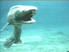 Super rare Frilled Shark from Japan.  Lives as low down as 4,200 ft.  They grow up to 6.5 feet, have 300 trident shaped teeth, and eat small squids and other soft bodied prey.
