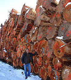 Pioneer Log Homes  Andre