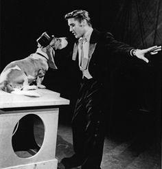 "Elvis singing ""You Ain't Nothin' But A Hound Dog"" to a basset hound. Love it."